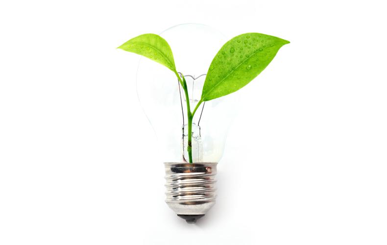 Plant growing inside lightbulb